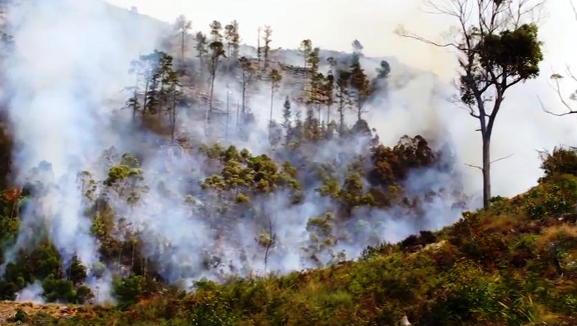 Incendii devastatoare la Cape Town