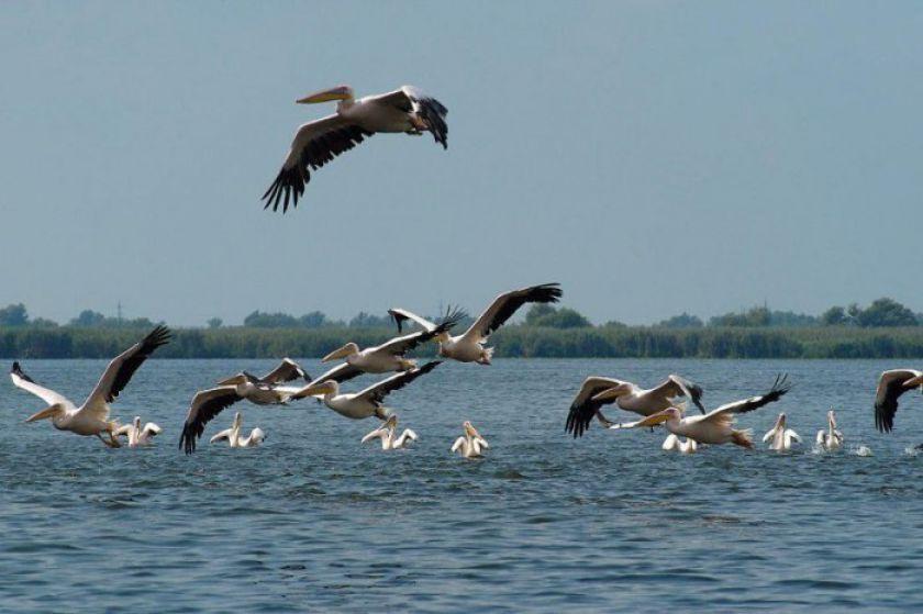 Delta Dunarii tarăm de vis