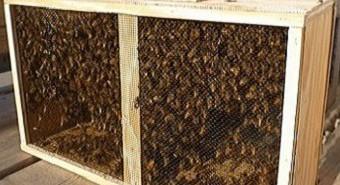 Miere, albine, apicultura