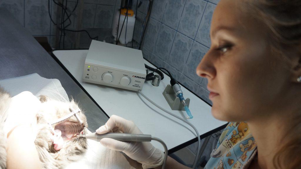Caini, accidente si clinici veterinare. Aparat radiologic Clinica Favnet