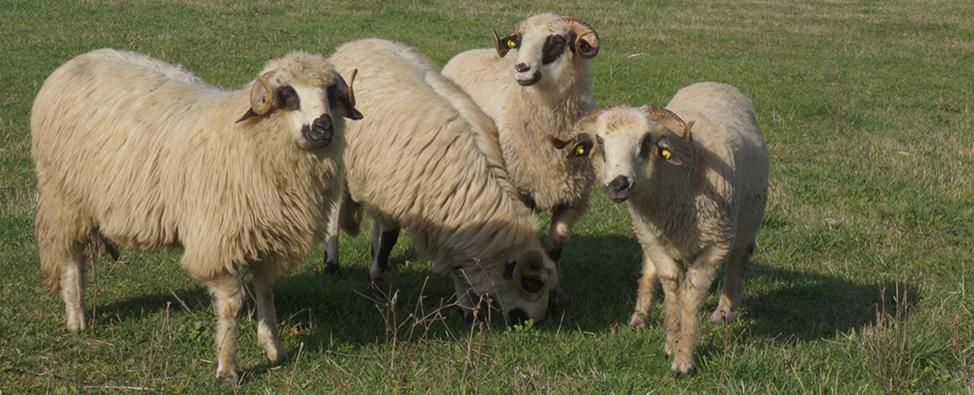 Ai o ferma de animale? Cum asiguri succesul ei