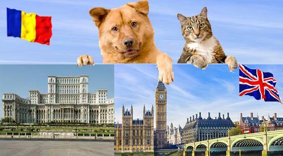 Cine iti poate transporta in siguranta animalul de companie dintr-o tara in alta?