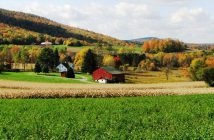 Secretele succesului unei ferme