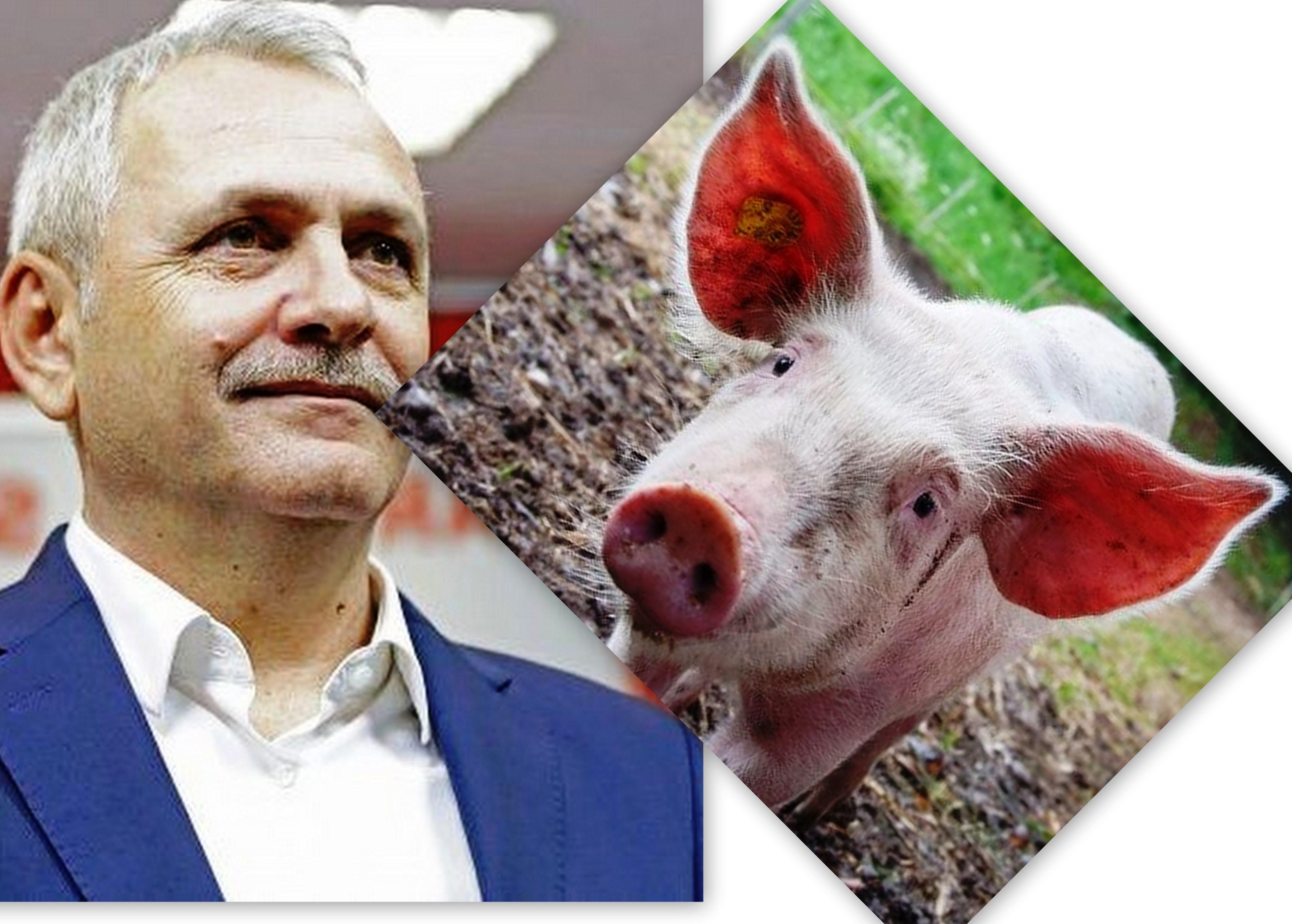 Dragnea, PSD, partide politice