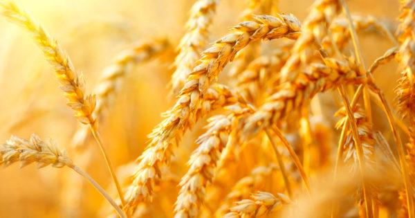 Agricultura de calitate