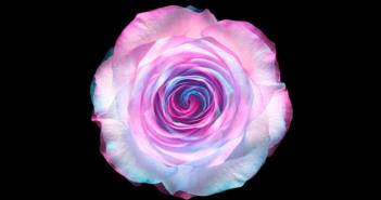 Florile criogenate, atractia clientilor din floraria ta in preajma sarbatorilor de iarna
